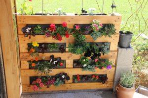 mur végétal palette